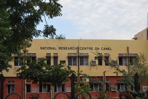 National Research Center on Camel