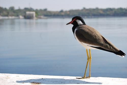 Nehru Park bird