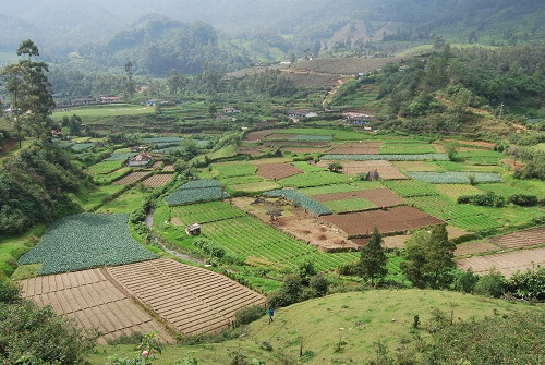 campi in Munnar