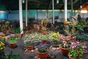 inside thread garden