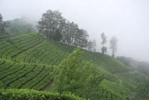 Nebbia in Munnar