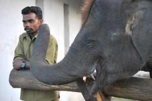 Elephant camp baby elephant