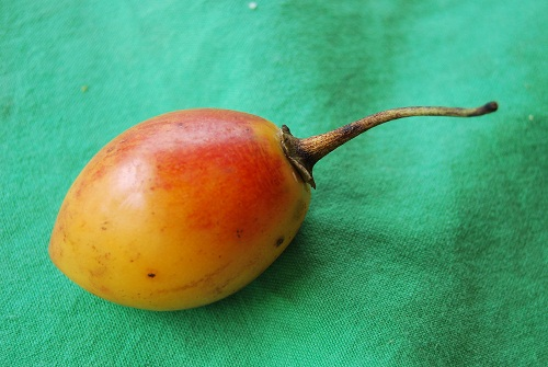 Tamarillo - tomato tree