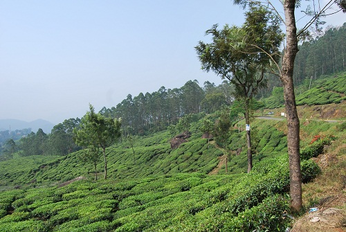 hillside Munnar