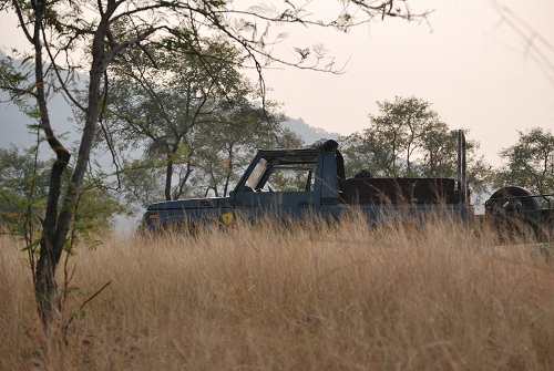 Jeep safari al Panna National Park
