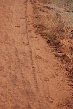 Impronte al Panna National Park