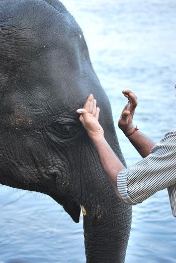 Momento del Tikka per gli elefanti del centro