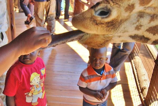 Scaried Kid Giraffe Giraffa