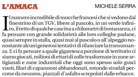 Amaca Michele Serra Mucche