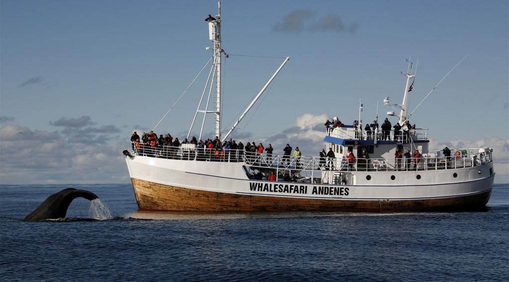 Whale Safari - Foto di http://www.stavecamping.no