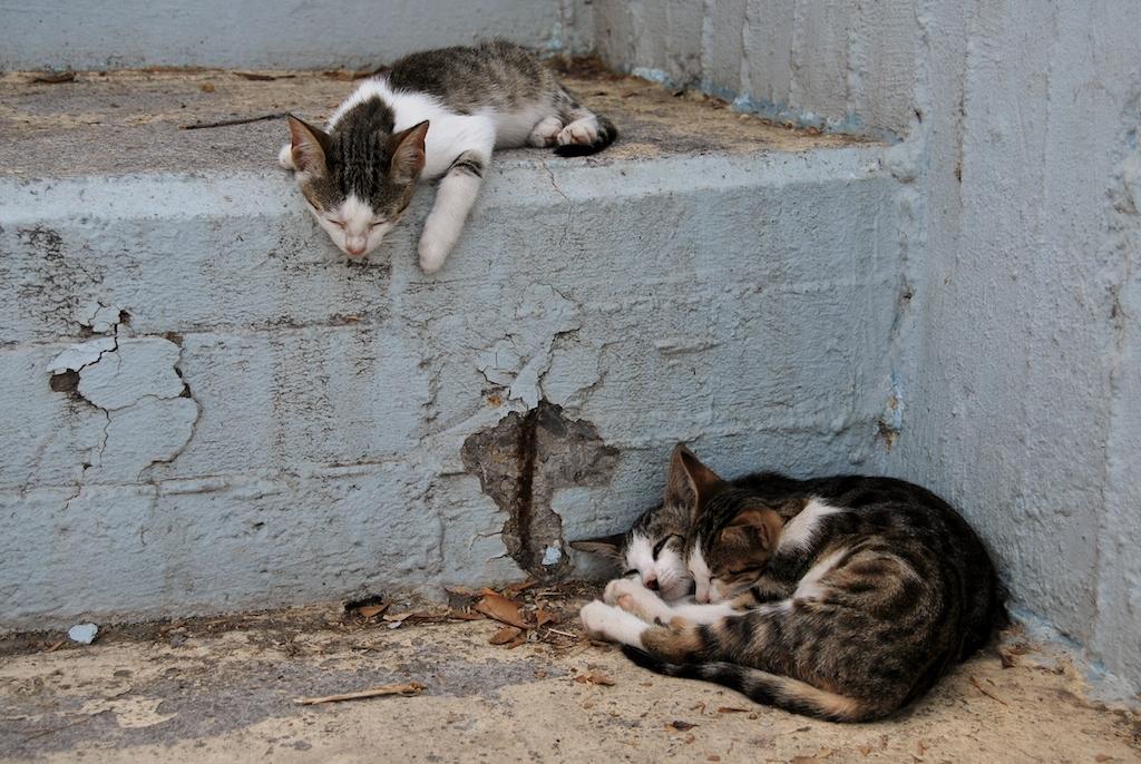 Gatti di Hersonissos
