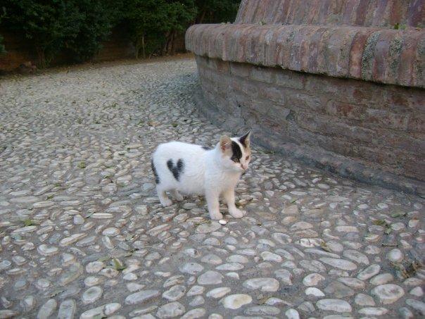 Gattino con il cuore Alhambra
