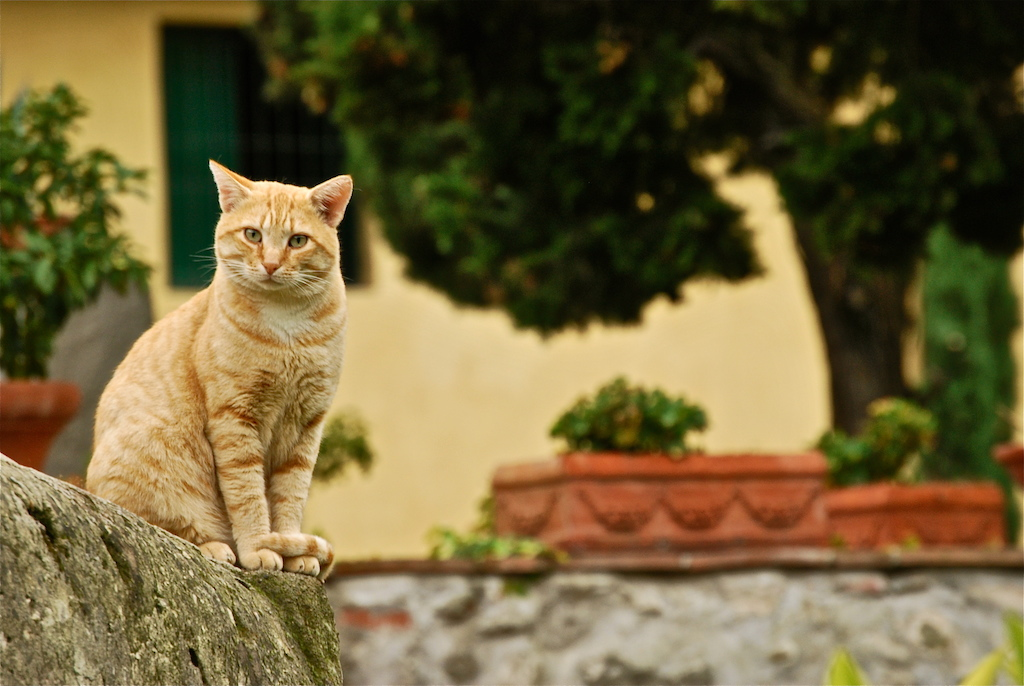 Gatto Rosso a Collodi (Pistoia)