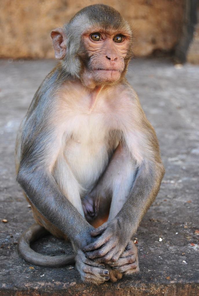 Anche la scimmia è preoccupata!