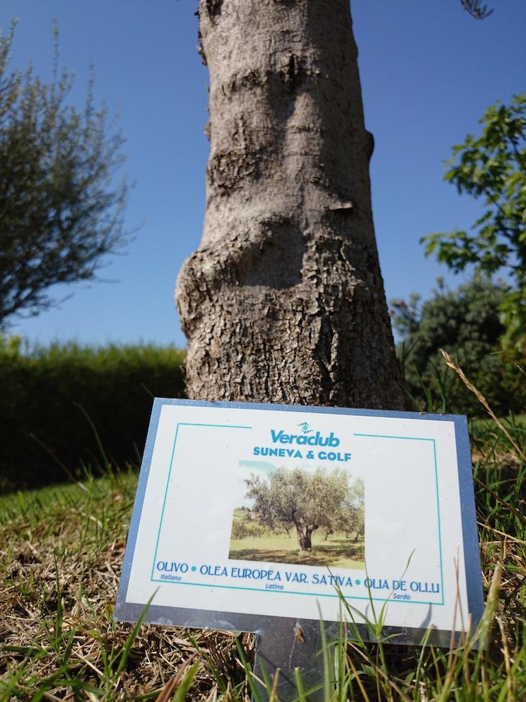 piante mediterranea