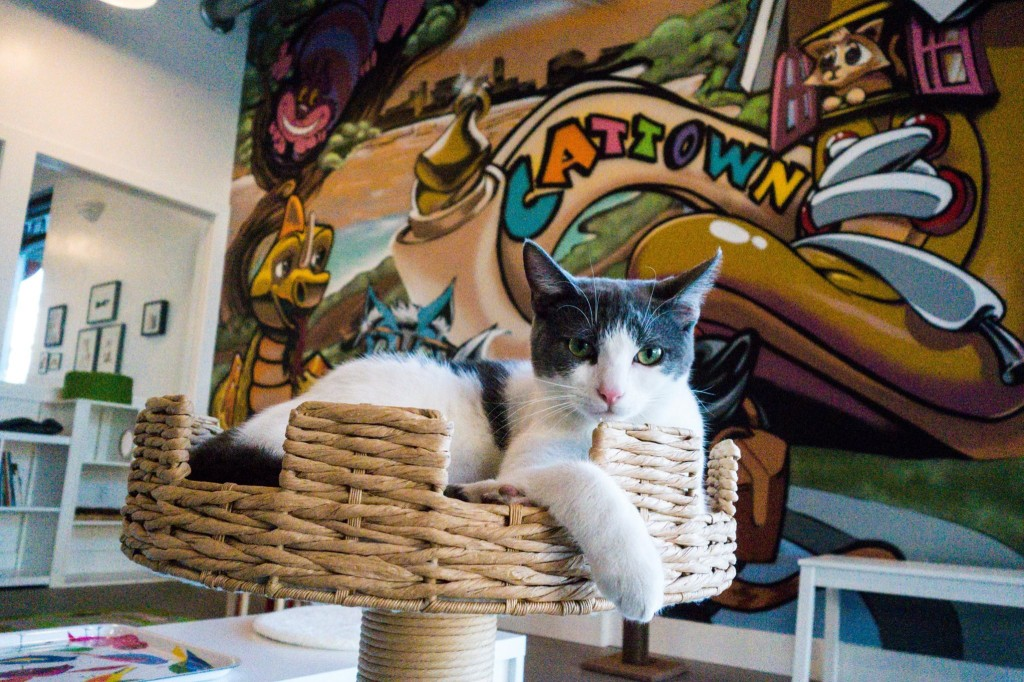 Cat Town Cafe & Adoption Center