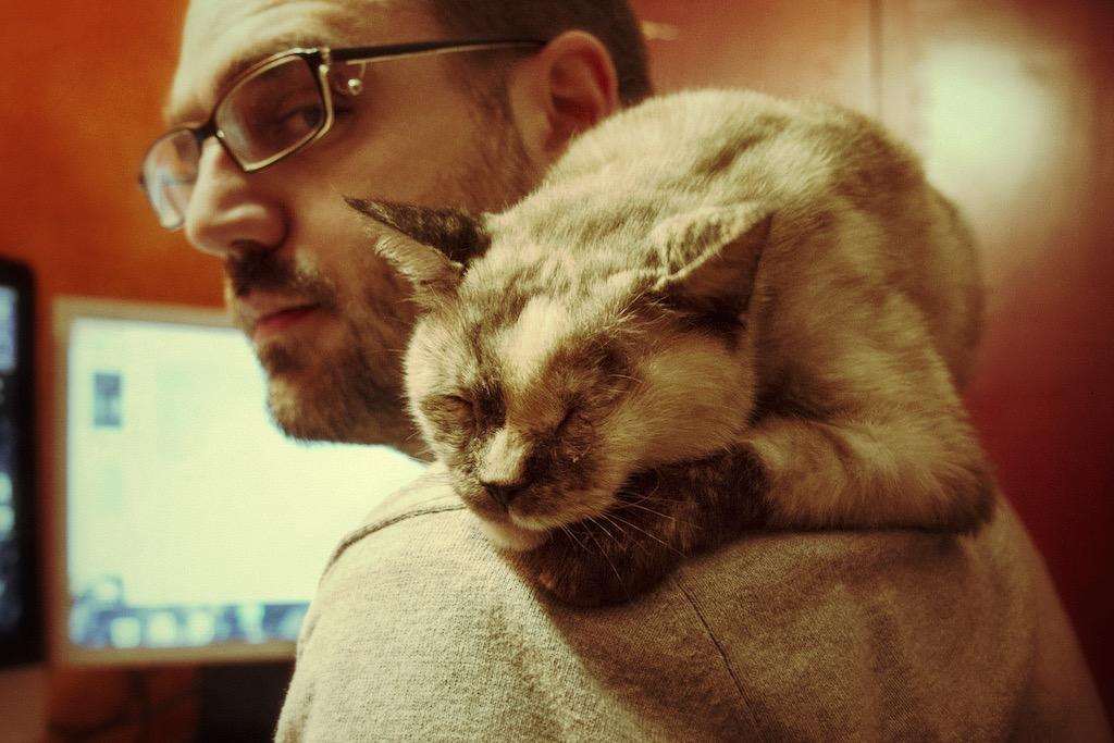 La nostra gatta Snajda dopo l'incidente