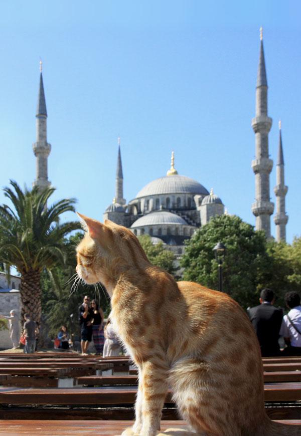 gatto-istanbul_valentina_paro
