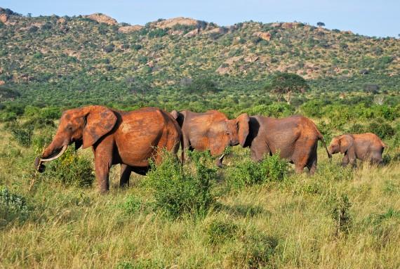 Elefanti Tsavo Kenya