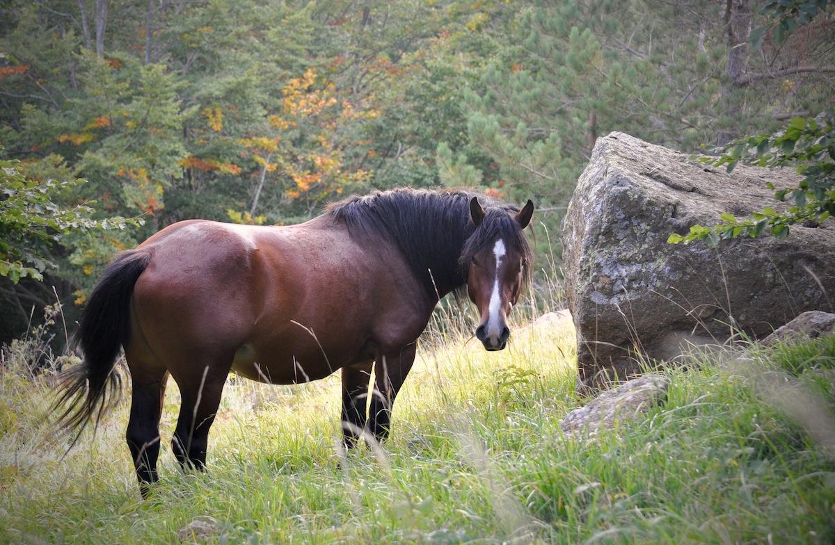 parco-dell-aveto-cavallo-selvaggio-liguria